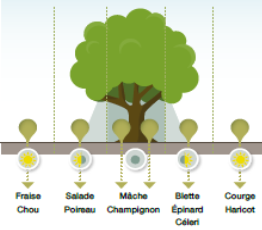 Hébé : Maraichage, Arboriculture, Apiculture